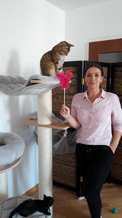 Workshop: Katzenspaß- wie man Katzen richtig beschäftigt- die entspannte Katze @petraott aCATemy Katzenschule