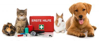 Petra Ott Erste Hilfe beim Haustier