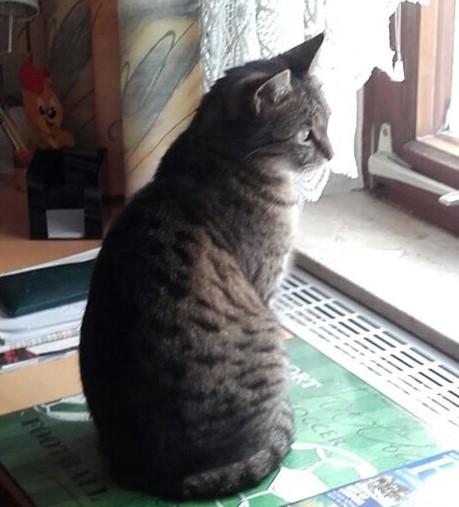 Petra Ott copyright Finny schreckhafte Katze