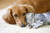 Hundesprache Katzensprache Petra Ott copyright