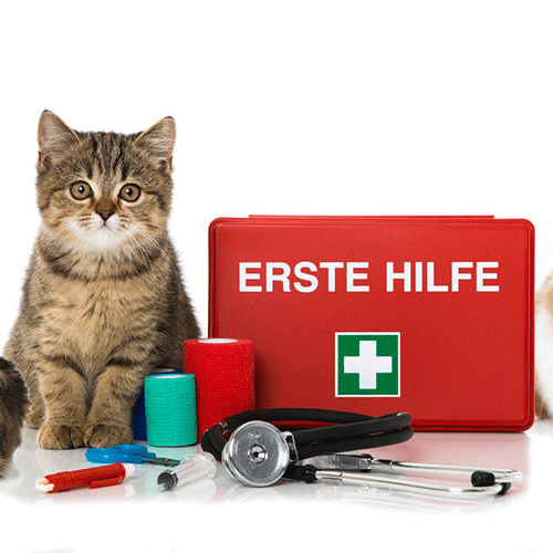 erstehilfe Kurs für Katzen @petraott @katzenschule @acatemy