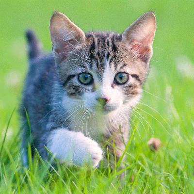 Katzebesserverstehen