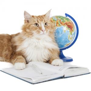 Online Kurs: Katzensitter-Ausweis für kompetente Katzensitter @petraott @katzenschule @acatemy