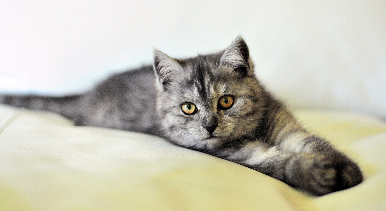 Musterfoto Katzenmobbing Petraott