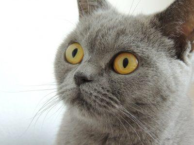 Musterfoto petraoot pixabay cat-179842_1280