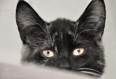 musterfoto petraott cat-3192872_1280