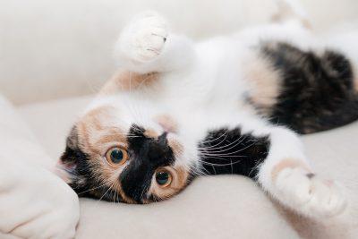 Musterfoto #katzenproblem petraott cat-649164_1280