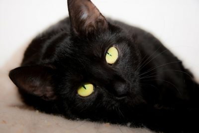 Musterfoto kazte pinkelt cat-316477_1280
