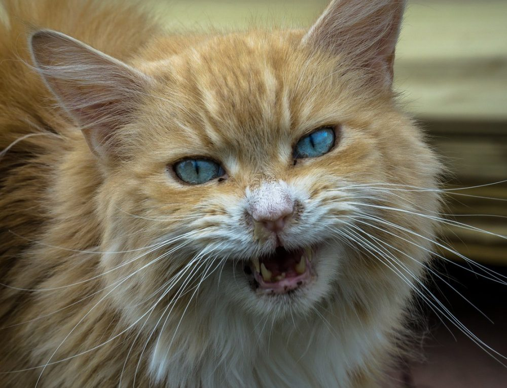 Katze ist aggressiv