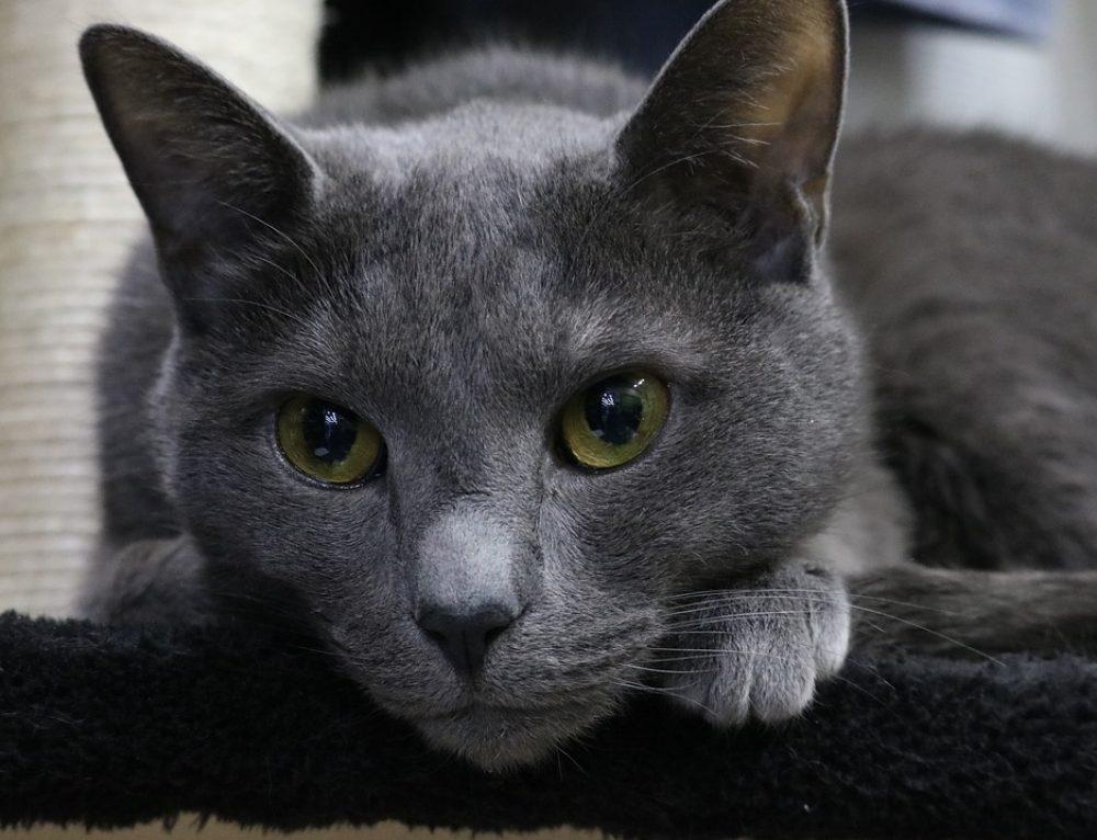 Neue Katze traut sich nicht unter er Couch hervor