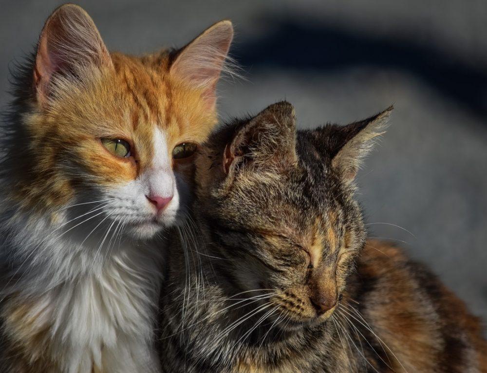 Molli und Minni- 2 katzen mit dem PICA Syndrom!
