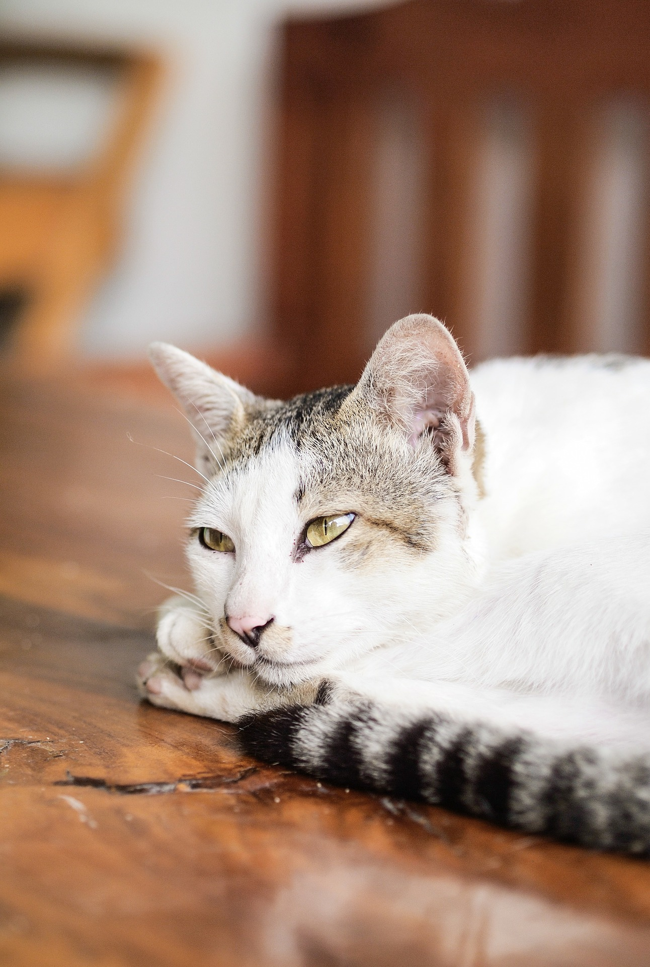 cat-169095_1920