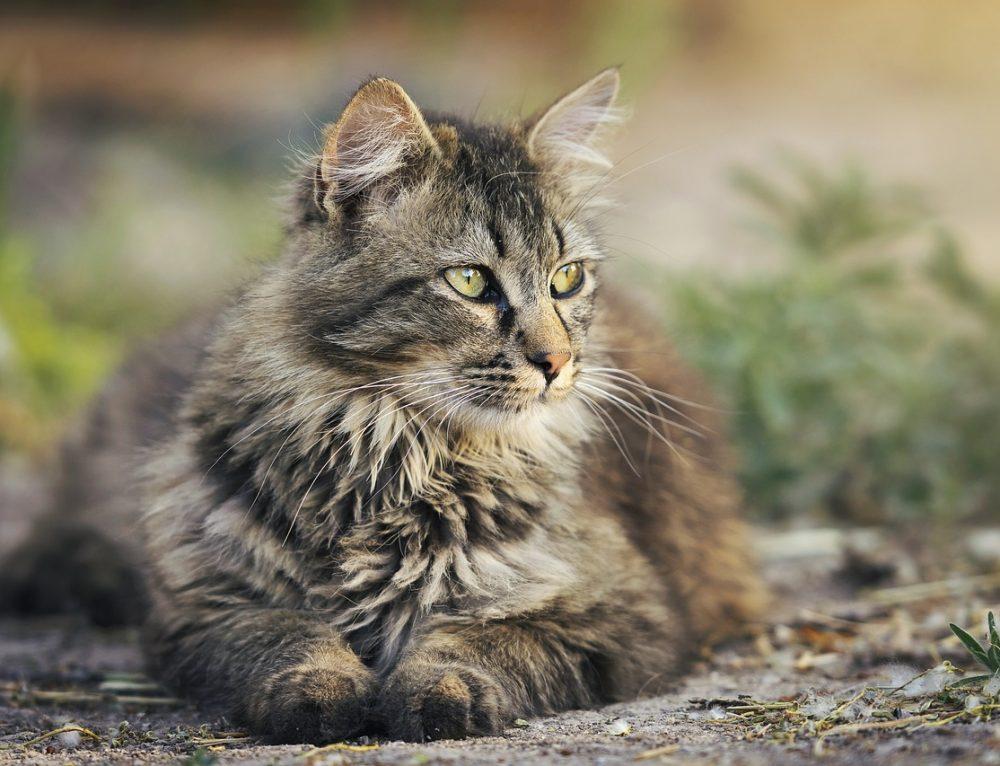Katze ist zum Nachbarn abgewandert und ist dort unsauber