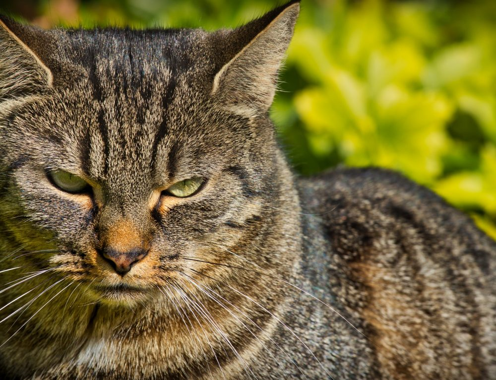 Nach Zusammenziehen der Partner mit jeweils 1 Katze gibt´s Probleme