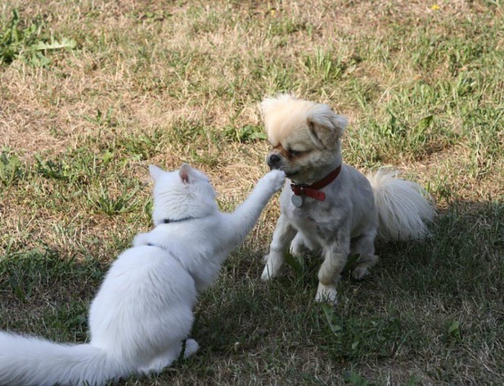 Familie nimmt zum Hund einen Kater auf – wir helfen beim Freundschaft schließen