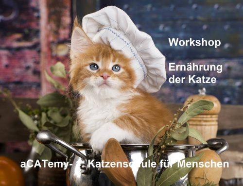 GRAZ: Workshop: Meine Katze gesund ernähren in der aCATemy