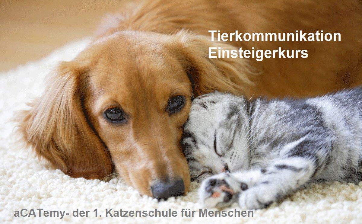 Petra Ott Tierkommunikation