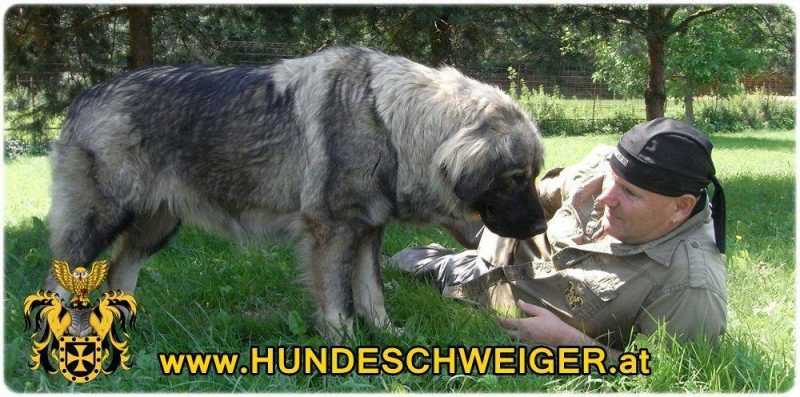 Hundeschweigerseminar