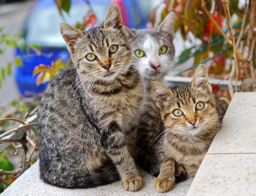 Tiger, Loki und Gizmo 3 liebenswerte Kater