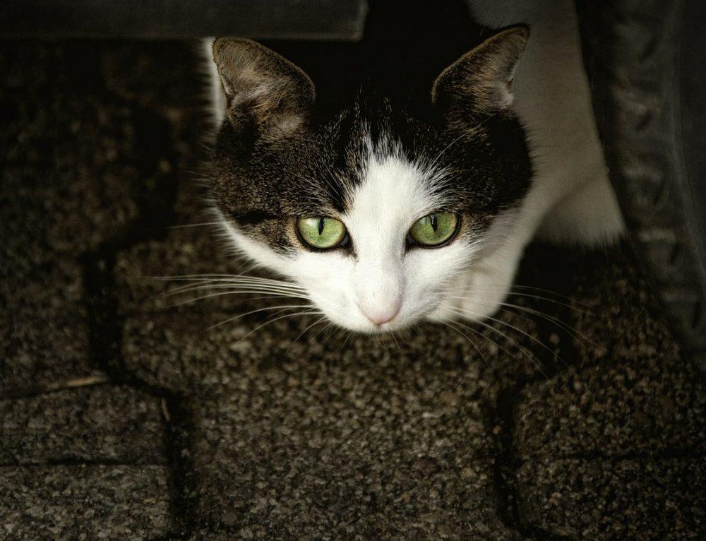 Katze Lilly hat Angst vor dem neuen Lebenspartner der Katzenmama