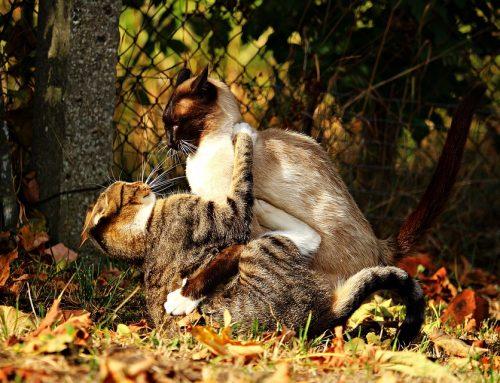 4 Katzen außer Rand und Band