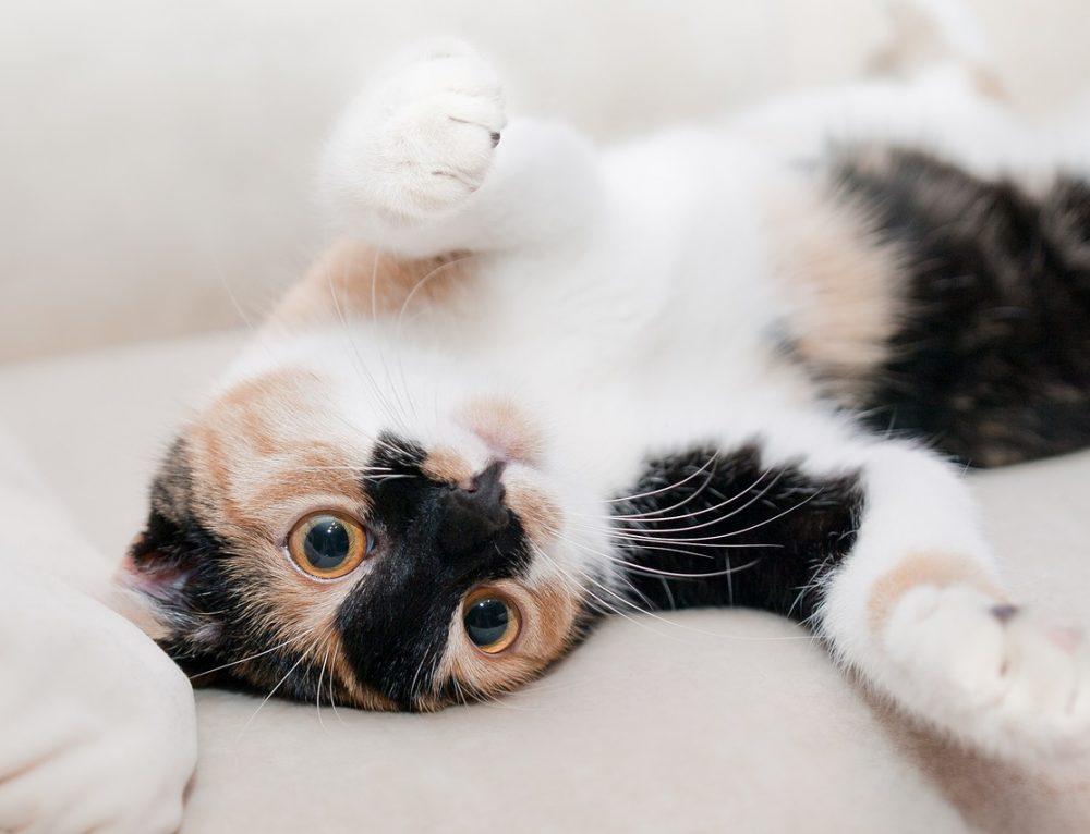 Katze Mali zieht um