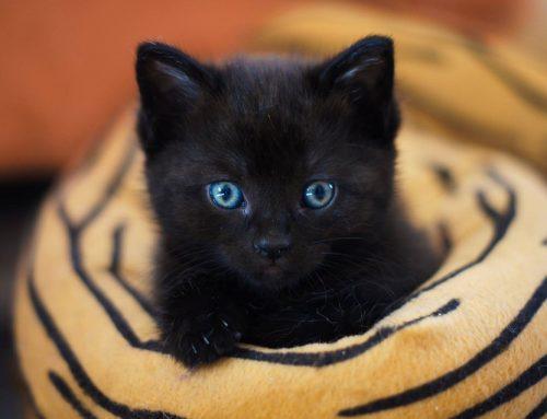 Ein Katzenbaby zieht ein