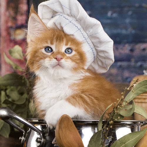 Ernährung und warfen für Katzen @petraott aCATemy Katzenschule