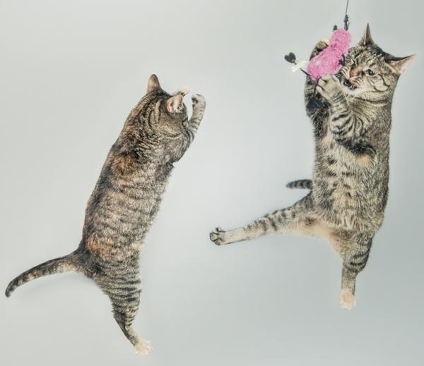 Onlinekurs: Katzenspaß- wie man Katzen richtig beschäftigt- die entspannte Katze @petraott @katzenschule @acatemy