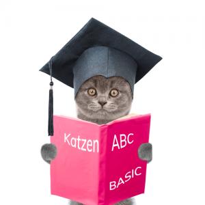 Onlinekurs: Kommunikation und Körpersprache der Katze BASIC @petraott @katzenschule @acatemy