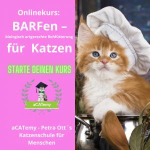 Katzennahrung Ernährung für katzen barfen Kurs petraott