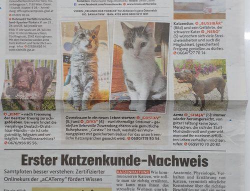 Katzenkunde-Nachweis mit dem Tierschutzkennzeichen ausgezeichnet