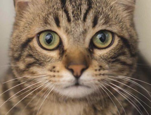 Artikel im INSIDER Magazin – Die Sprache der Katzen –