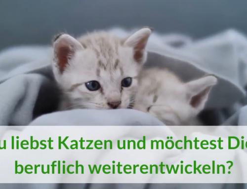Fernlehrgang zum zertifizierten körpersprachlich orientierten, ganzheitlichen Katzenverhaltensberater / Katzencoach