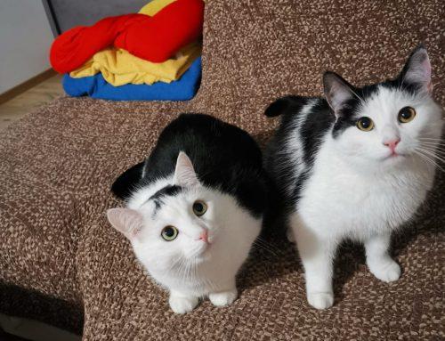 Kundenfeedback von den Katzen Felix und Mila aus Tirol