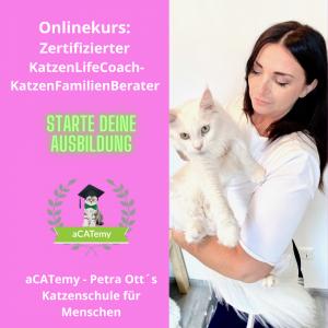 Katzenausbildung acatemy Katzenschule petraott