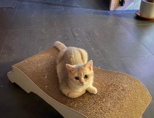 Ein sorgloses Katzenleben – das ist meine Intuition für die Ausbildung zum Katzenexperten