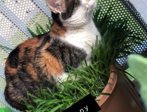 Mein Herz gehört den Katzen – Fernlehrgang zur zertifizierten Katzenverhaltensberaterin