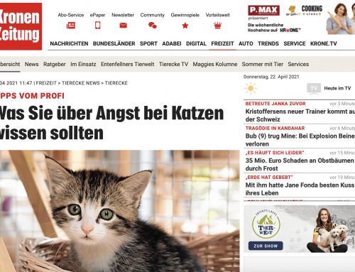 Krone Tierecke- Petra Ott -TIPPS VOM PROFI Was Sie über Angst bei Katzen wissen sollten