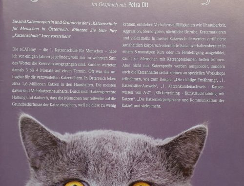 Interview-Insider Magazin: Kann man Katzen erziehen