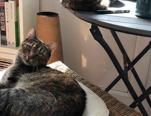 Katzen-Onlinekurs: Es ist ein trauriger Irrglaube, dass Katzen so viel weniger Zeit mit uns brauchen als Hunde