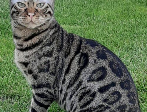 """Einzelunterricht-Schülerin der aCATemy: """"Ja und ich möchte Katzencoach werden weil ich Katzen liebe!"""